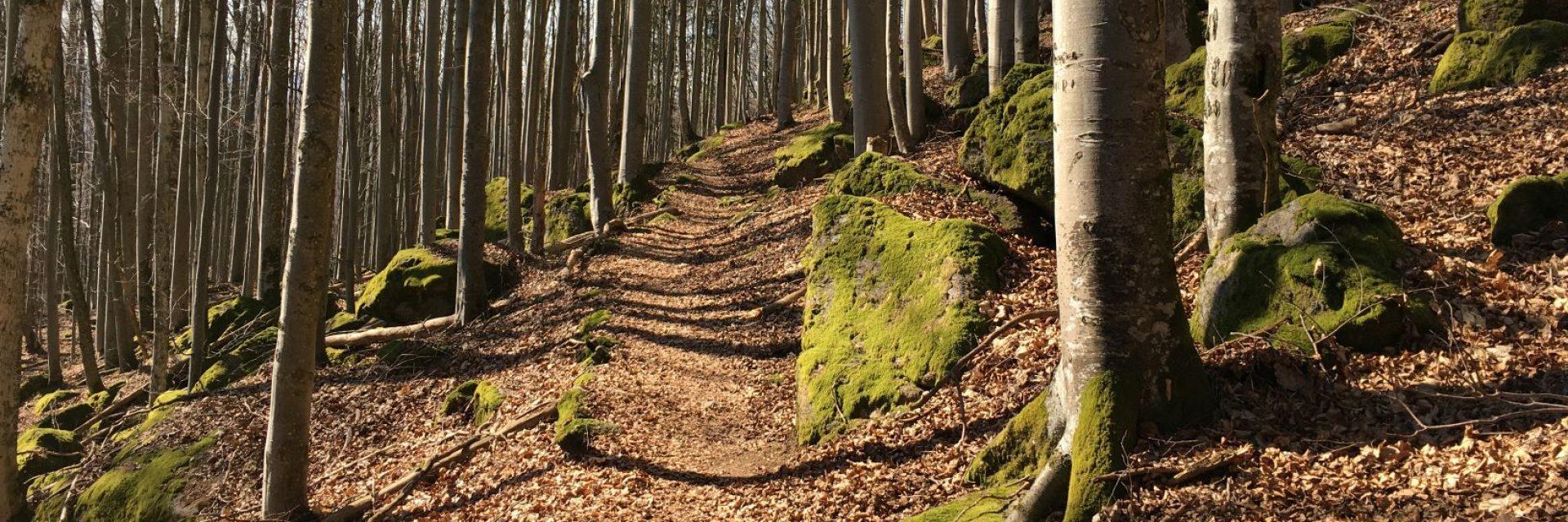 Praxis im Wald